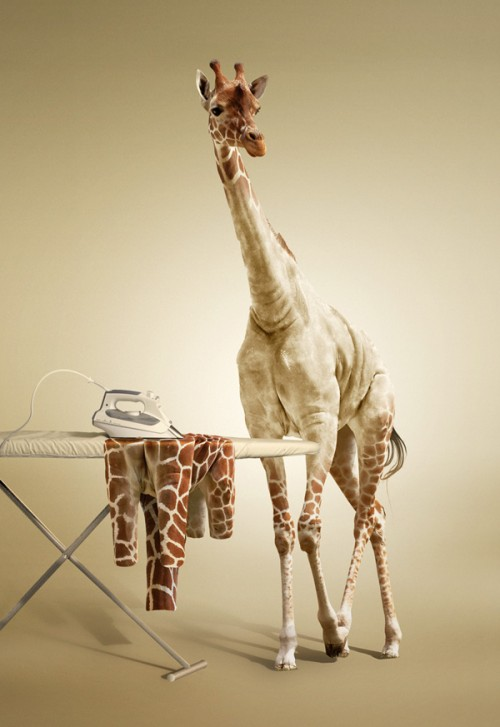 16_Undress a Giraffe