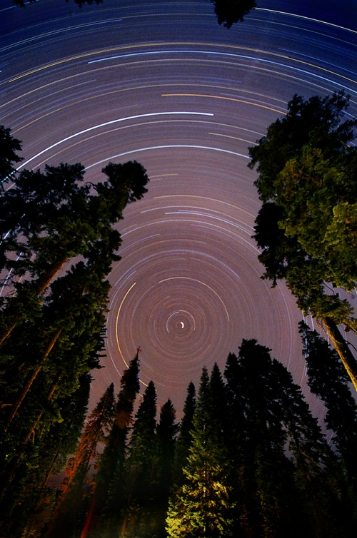 20_Sequoia Star Trail 01