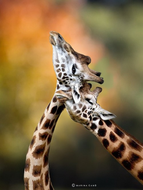 5_Wildlife Photography by Marina Cano