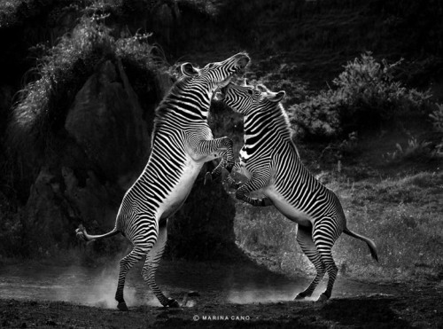 9_Wildlife Photography by Marina Cano