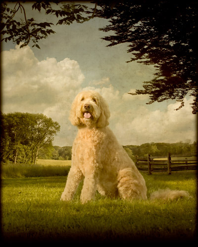 10_Pet Portraits by Andrew Pinkham