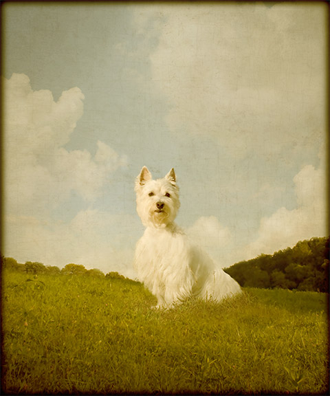 2_Pet Portraits by Andrew Pinkham