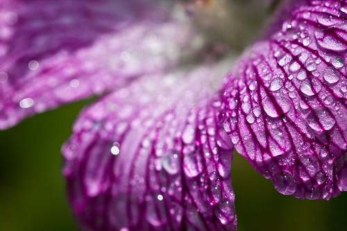 57_Purple Drops