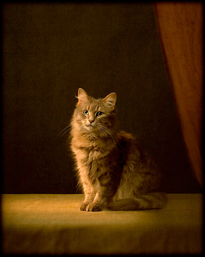 8_Pet Portraits by Andrew Pinkham