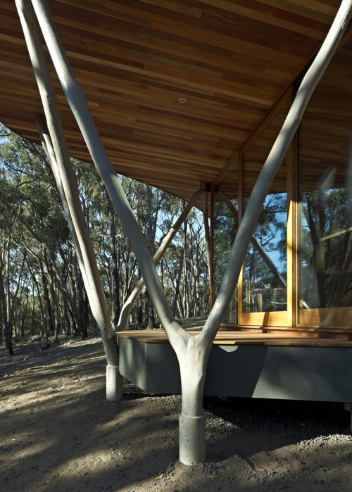 8_Trunk House by Paul Morgan Architects