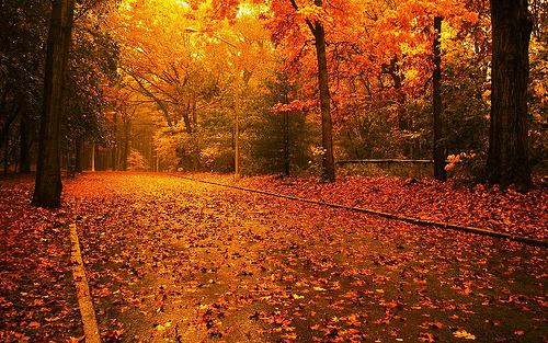 20_Autumn Nature Wallpaper