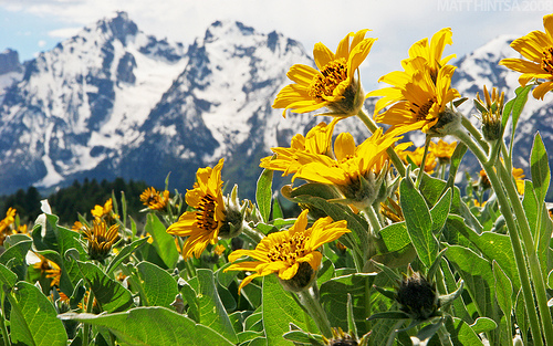 28_Summer In The Tetons