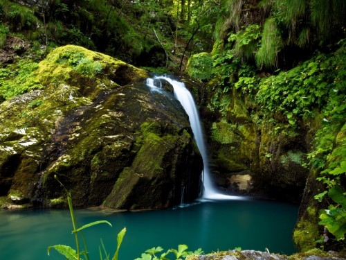 6_Waterfall Rain Forest