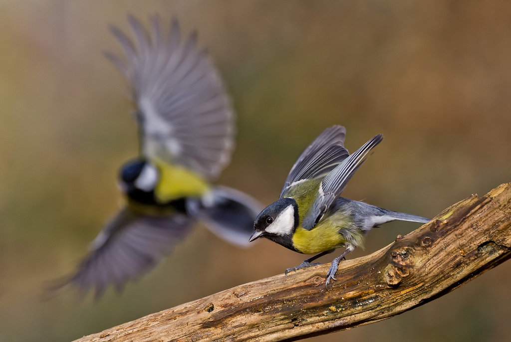 Stunning Bird Photography
